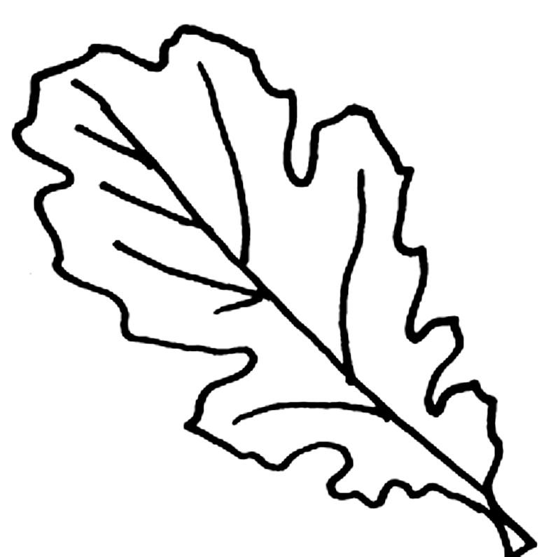 шаблоны листьев дубовый листок