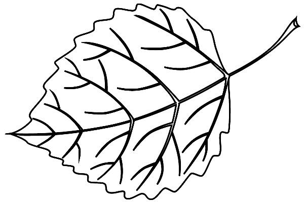 шаблоны листьев береза ольха