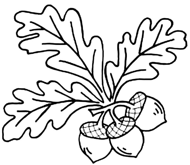 шаблоны дубовых листьев с желудями раскраска