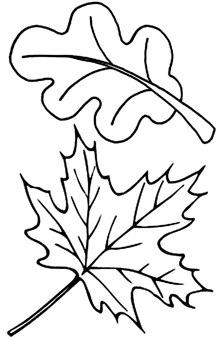 шаблоны листьев дуб и клен