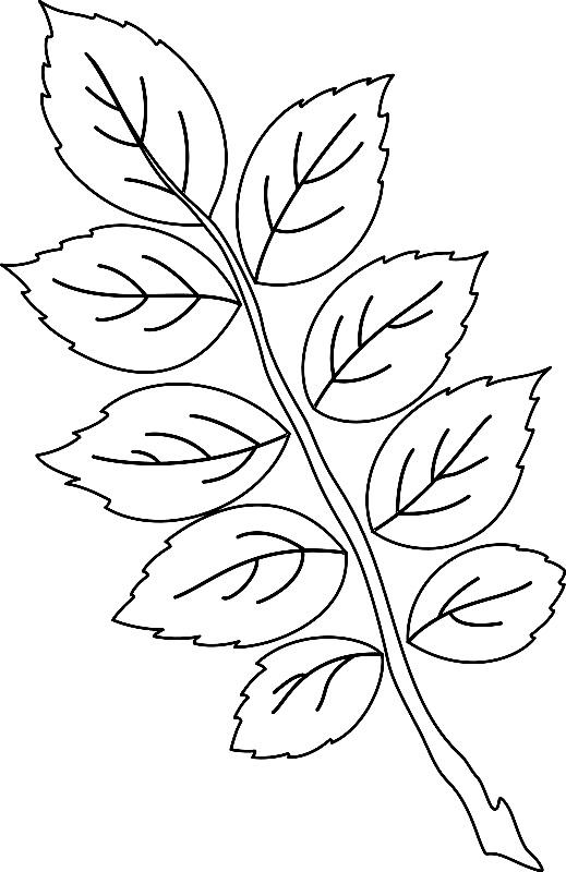 шаблоны листьев веточка