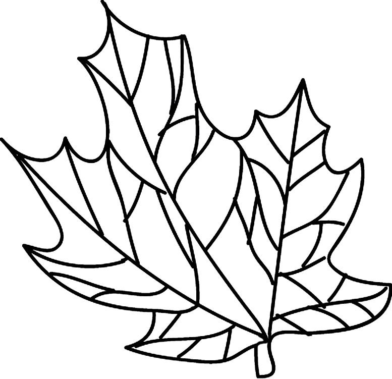 шаблоны листьев для поделок