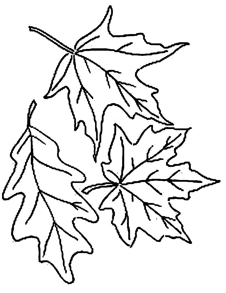 шаблоны листьев раскраска