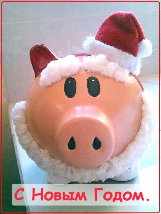 свинка с новым годом открытка