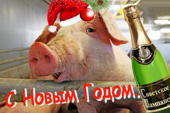 с новым годом открытка со свиньей