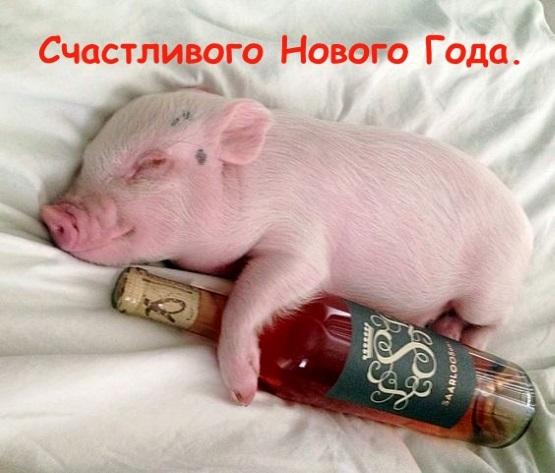 открытка свинья поросенок