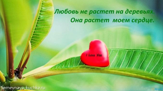 картинка люблю тебя любовь растет
