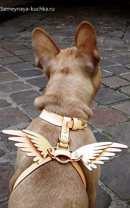 ошейник с крыльями поделка из кожи своими руками спецзаказ