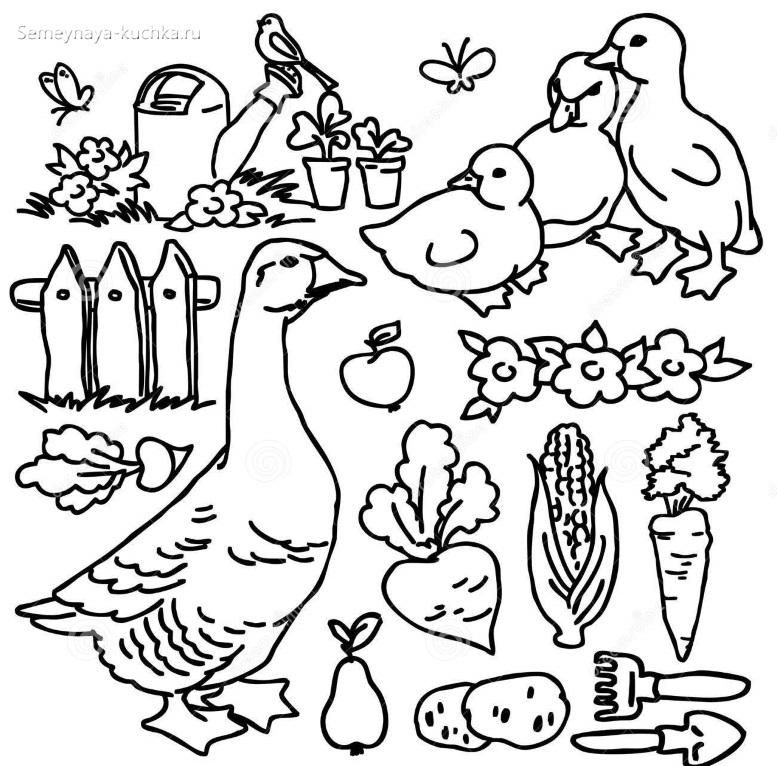 гуси и гусята раскраска для малышей
