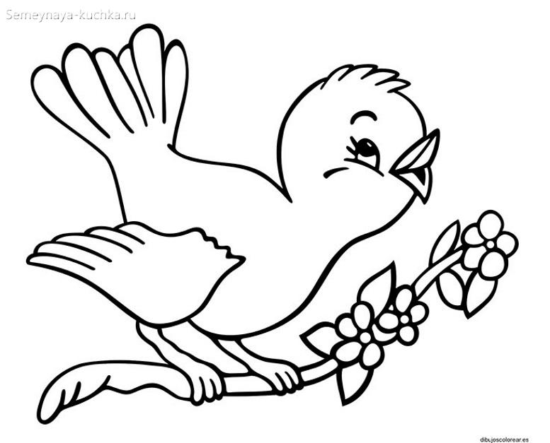птичка поет раскраски для самых маленьких
