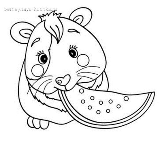 хомячок хомяк раскраска для малышей
