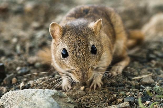 мышка в лесу фото