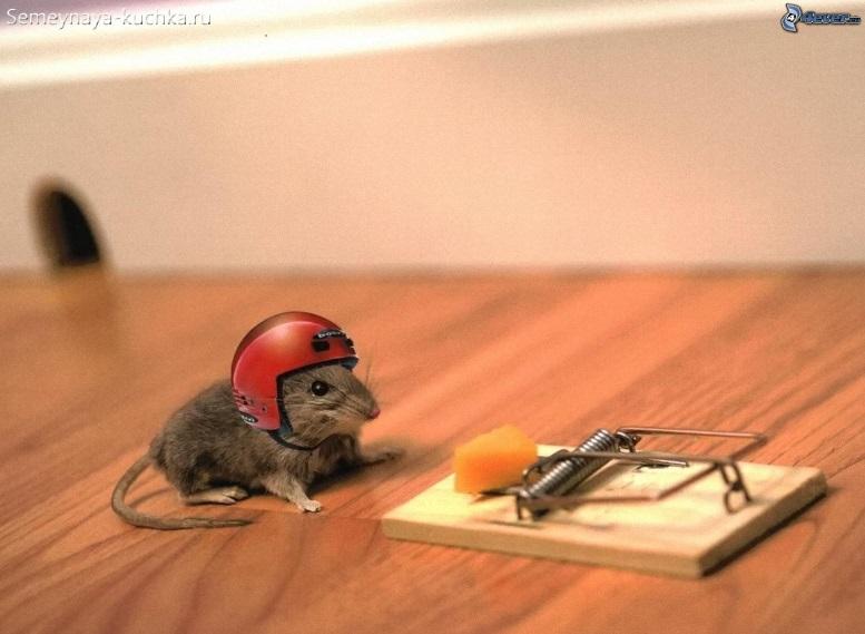 мышь в каске у мышеловки фото
