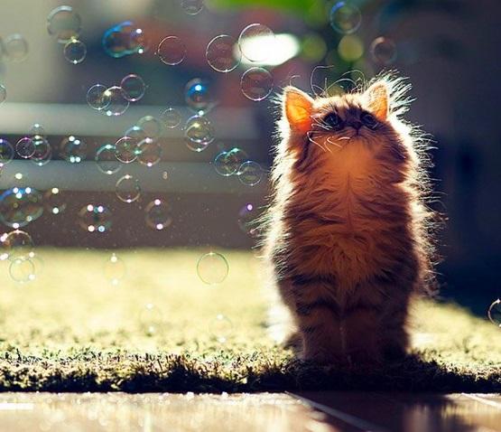 милый котенок с пузырями
