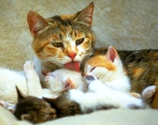 милые котята с кошкой