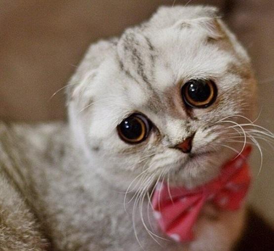 милый котенок с большими глазами