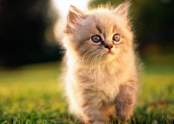 милый котенок пушистик