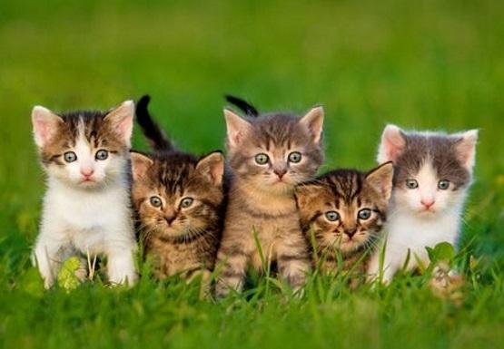милые полосатые котята