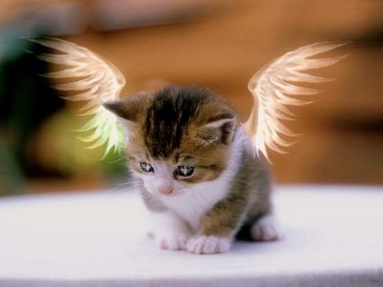 милый котенок с крыльями