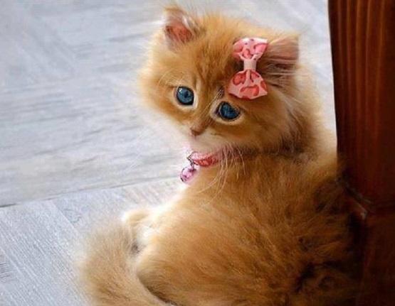 милый рыжий котенок девочка