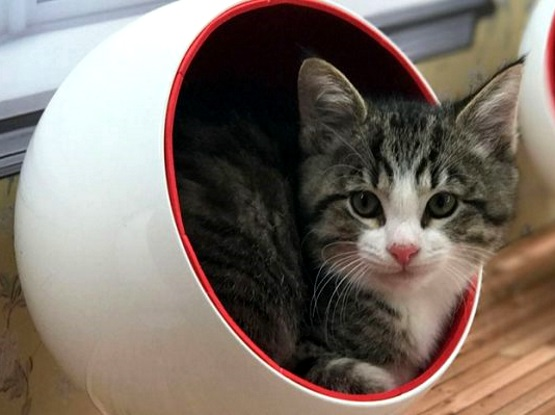 милый котенок в чашке