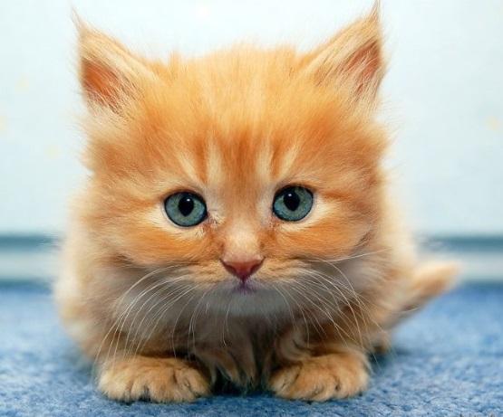 милые котята рыжие