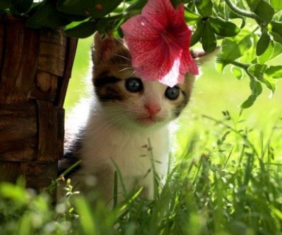 милые котята в траве