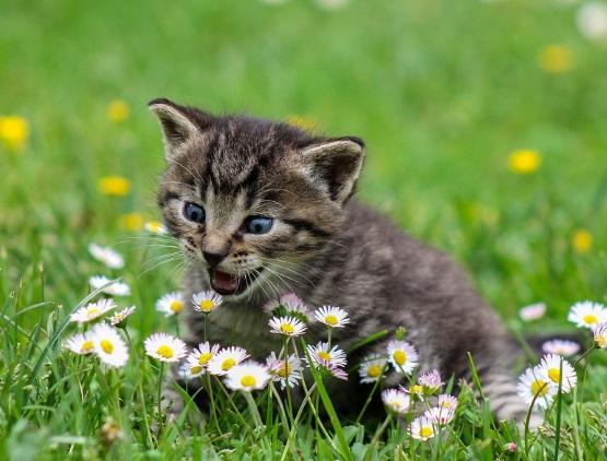 милый котенок в ромашках