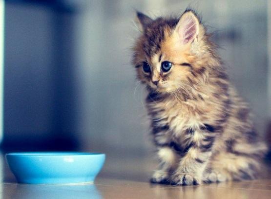 милый котенок серый в полоску