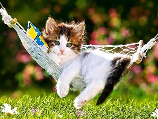 милый котенок в гамаке
