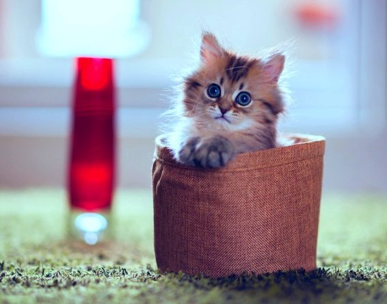 милый котенок рыжий