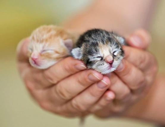 милые котята рыжий и серый