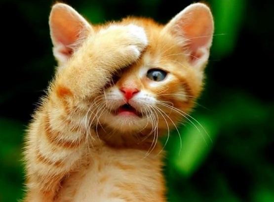 милый котенок рыжий с лапкой на мордочке