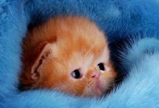 милый рыжий котенок в одеялке