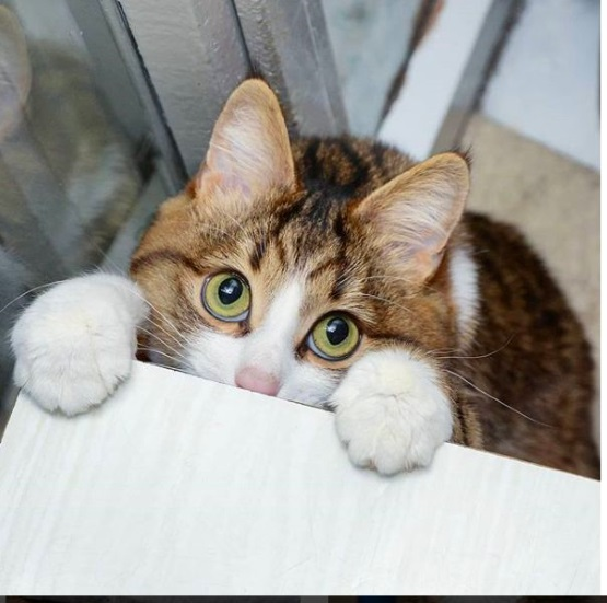 мылые котята фото