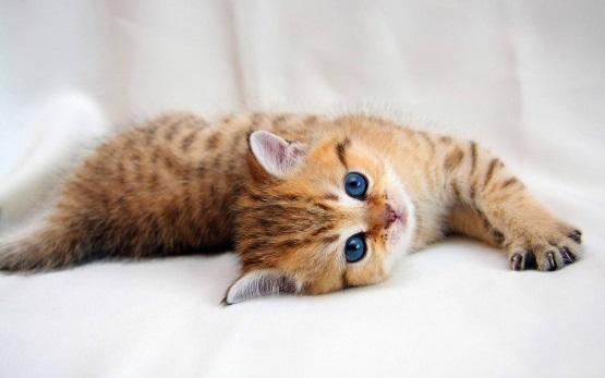 милый котенок полосатый