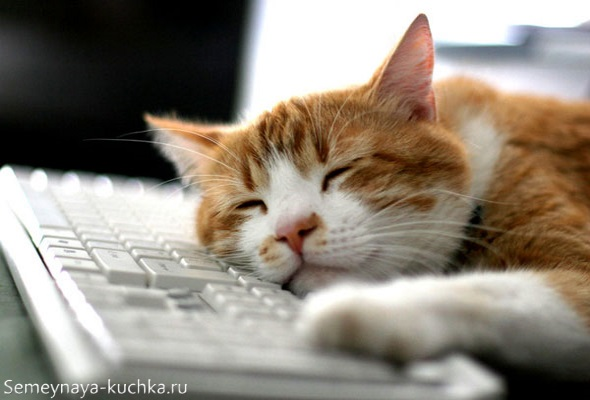 милый спящий котик рыжий с белым