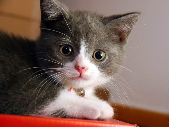 милый котик с розовым носиком