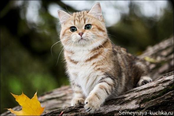 милый котик осенью