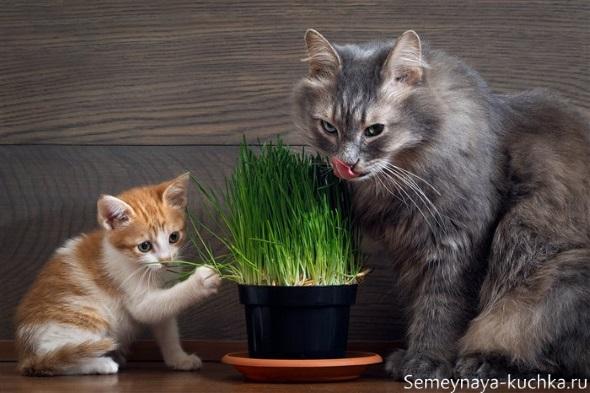 милый котик с кошкой