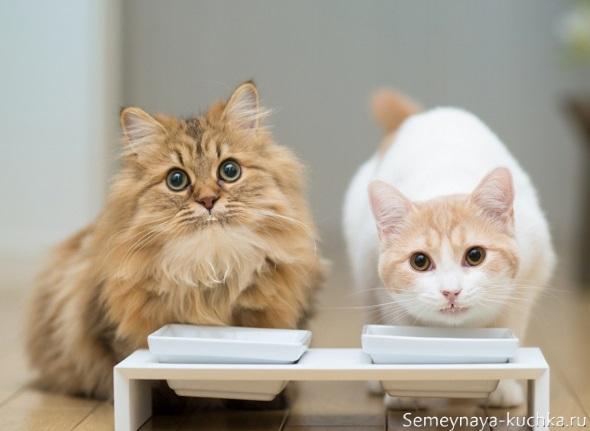 милые котики кушают