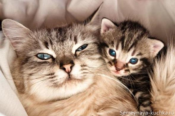 милый котик с мамой