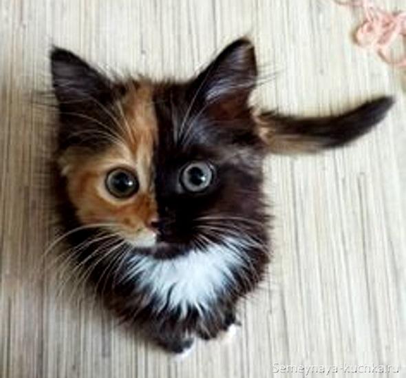 милый котик черно-рыжий