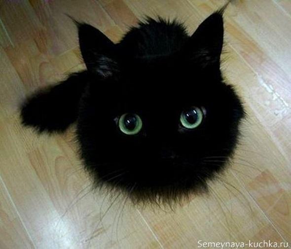 милый черный котик с зелеными глазами