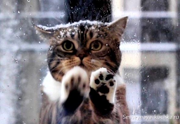 милый котик мерзнет зимой