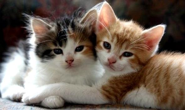 милые котики обнимаются