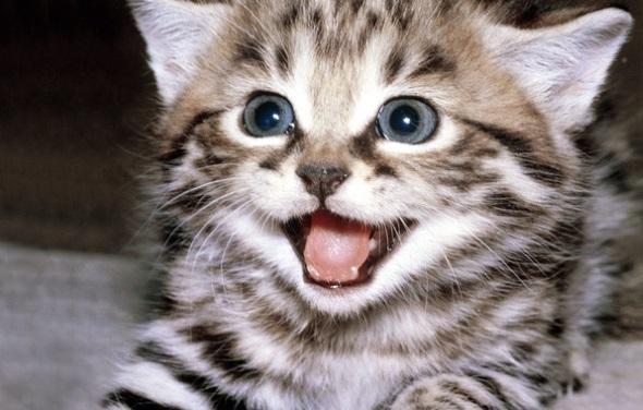 милый котик мяукает
