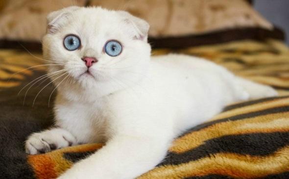 милый белый котик