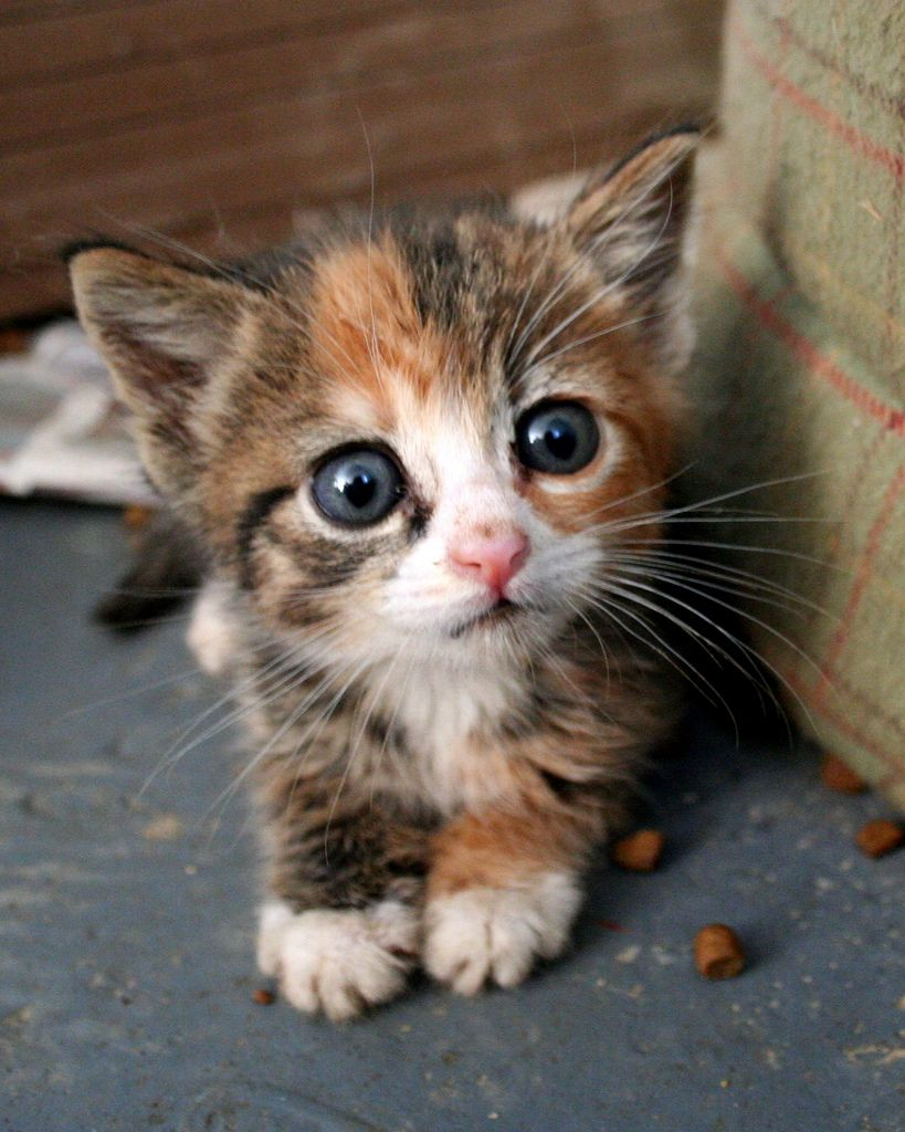 милый котенок рыжий белый серый