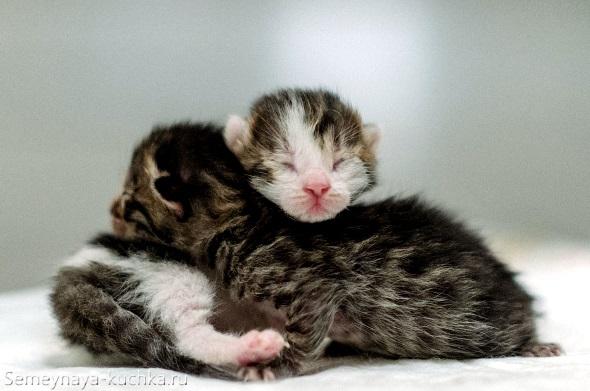 два милых котика спят друг на друге